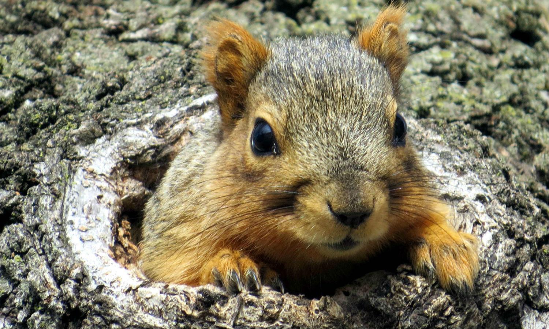 look a squirrel